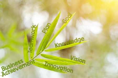 business mind: Branches of bamboo leaf as a mind map concept - Business, successful, achievement, goal, growth concept.