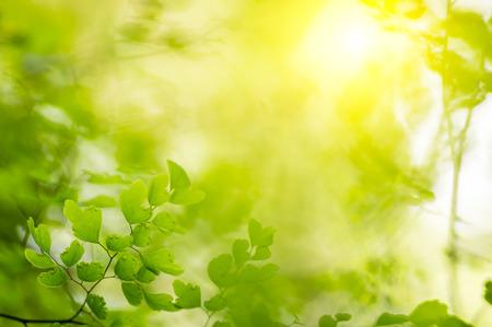 自然の緑の背景、ボケ味と電界 (DOF) 効果の深さ。