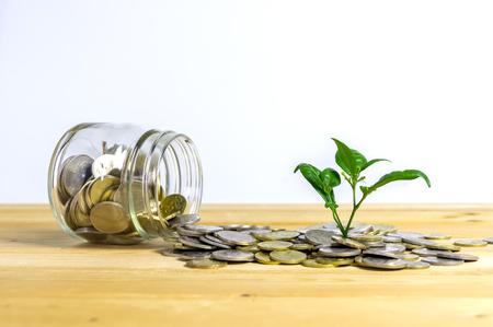 お金を成長コンセプト、ビジネスの成功の概念、緑の環境投資概念。白い背景で隔離のコインの山に生育する樹木。マレーシアのコイン。
