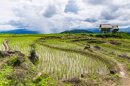 Rice terrace and mountain with the rain storm at the background at Pa Bong Piang near Inthanon National Park and Mae Chaem, Chiangmai, Thailand.