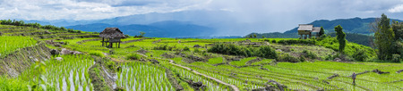 A panorama view of A farmer is walking along his rice field with little hut and Rice terrace in a cloudy lighting surrounded by trees and mountains with a raining storm in the background at Pa Bong Piang near Inthanon National Park and Mae Chaem, Chiangma