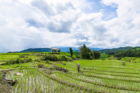 A farmer is walking back to his hut on his rice terrace with a rain on the background at Pa Bong Piang near Inthanon National Park and Mae Chaem, Chiangmai, Thailand. Stock Photo