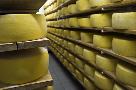 Cheese drying in shelf in a dairy. Pico Island, Azores, Portugal
