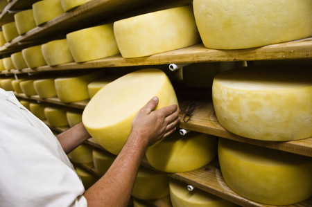Man inspecting cheese drying in a dairy, Pico Island, Azores, Portugal