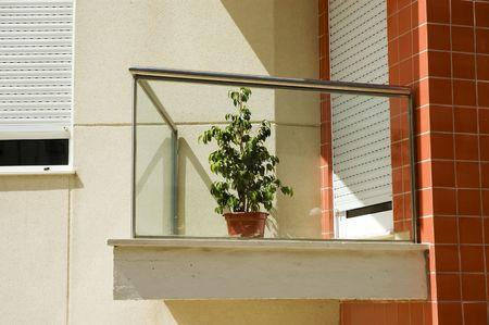 Solitary plant in a balcony Standard-Bild