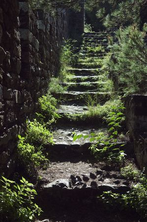 Old abandoned staircase covered with vegetation in back light