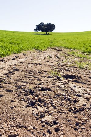 overrun: Crop field showing severe erosion caused by rain Stock Photo