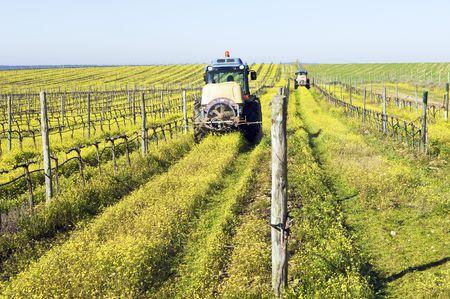 furrow: Farmers with tractors spraying the vineyard with pesticides Stock Photo