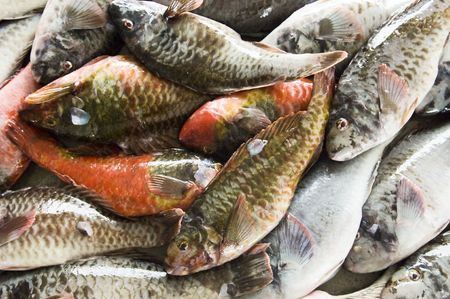 Parrotfish ready for sale at the market, Pico Island, Azores, Portugal Standard-Bild