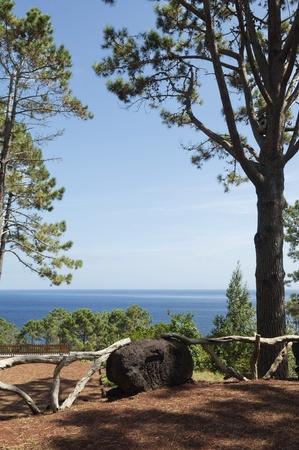 Natural park in Pico island, Azores, Portugal photo