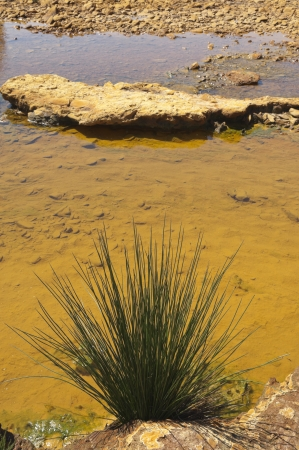 Bulrush in the polluted riverbed of Mosteirao, downstream abandoned pyrite mine of S  Domingos , Mertola, Portugal Stock Photo - 16018800