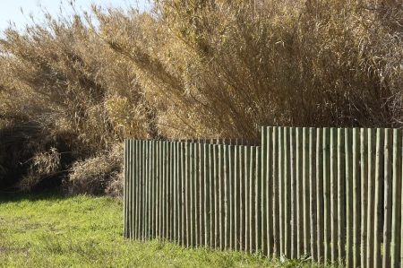 Wooden fence in a field of grass near a canebrake photo