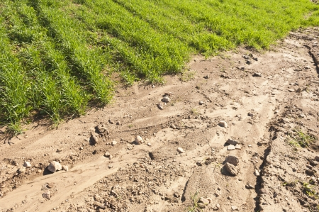 erode: Detail of erosion in a crops field Stock Photo