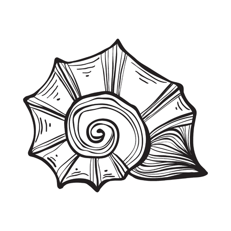 Sea shell nautilus. Black engraving vintage illustration. Ilustração