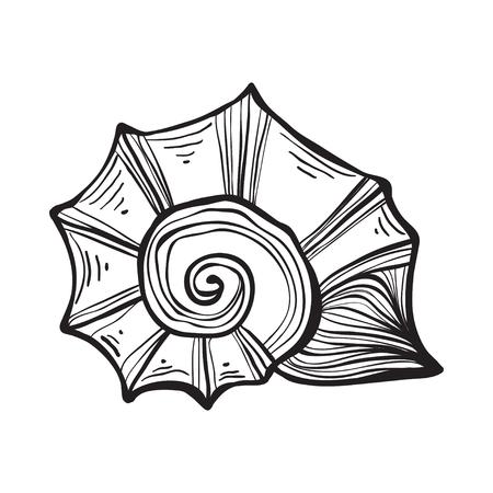 Sea shell nautilus. Black engraving vintage illustration. Banco de Imagens - 76394495