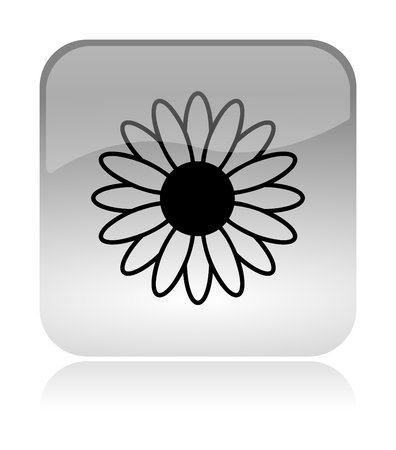 marguerite: Flower Spring Rounded Square Icon with Reflection Illustration Isolated on White Background Stock Photo