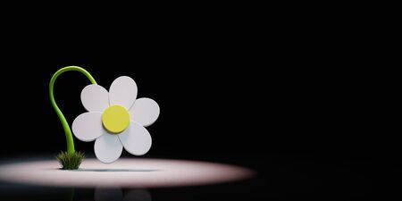 White Cartoon Daisy Flower 3D Shape Spotlighted on Black Background with Copy Space 3D Illustration 版權商用圖片