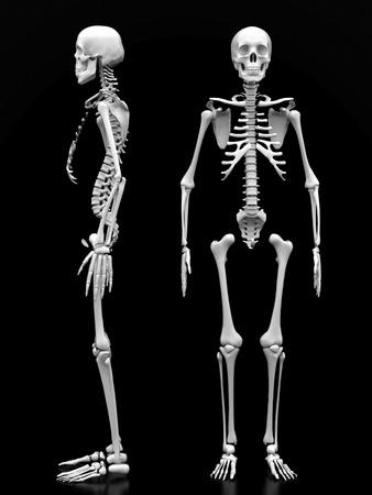 x ray skeleton: image of a white, a human skeleton on a black background Stock Photo