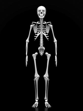 scheletro umano: immagine di un bianco, uno scheletro umano su sfondo nero