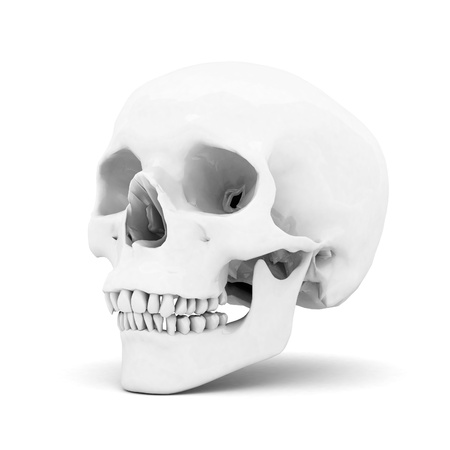 white skull on a white background isolated Stock Photo - 15623559