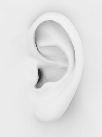 3D-Modell des Ohres auf einem grauen Hintergrund