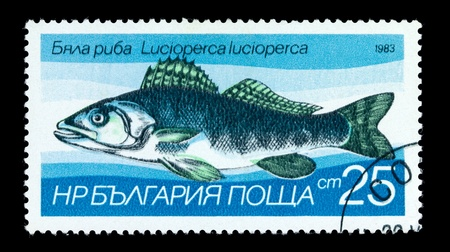 limnetic: BULGARIA - CIRCA 1983: A Stamp printed in BULGARIA shows image of a Zander with the description Lucioperca lucioperca from the series Fresh-water Fish, circa 1983 Stock Photo