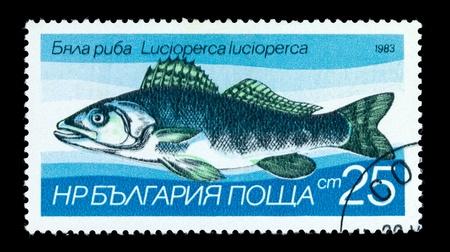 riverine: BULGARIA - CIRCA 1983: A Stamp printed in BULGARIA shows image of a Zander with the description Lucioperca lucioperca from the series Fresh-water Fish, circa 1983 Stock Photo