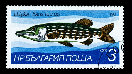 limnetic: BULGARIA - CIRCA 1983: A Stamp printed in BULGARIA shows image of a Pike with the description Esox lucius from the series Fresh-water Fish, circa 1983 Stock Photo