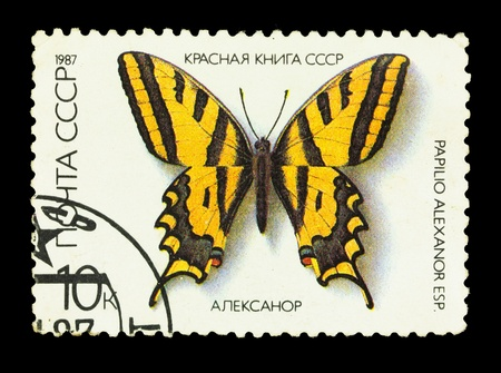 USSR - CIRCA 1987. A stamp is printed in USSR, shows the rare type of butterfly, circa 1987 photo