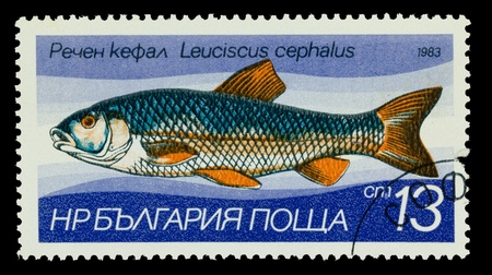 BULGARIA - CIRCA 1983: A stamp printed in Bulgaria, shows European chub, fat chub, chevin, pollard - Leuciscus cephalus, circa 1983 photo