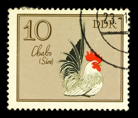 GDR - CIRCA 1979: A stamp printed in GDR shows Chabo Cock, series German Cock, circa 1979. Stock Photo - 11431149