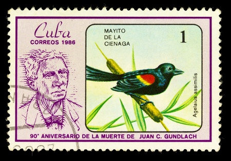 CUBA - CIRCA 1986: A Stamp shows image of a Warbler with the designation