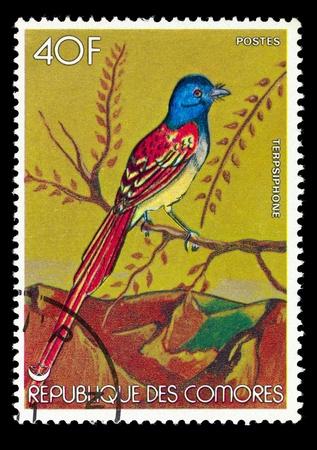 comores: COMORES - CIRCA 1986: Postage stamp printed in Comores, shows a bird the terpsiphone, circa 1986 Stock Photo
