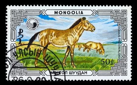 mongolia horse: MONGOLIA - CIRCA 1986: A stamp printed in Mongolia shows Przewalskis Horse - Equus Przewalskii, series, circa 1986