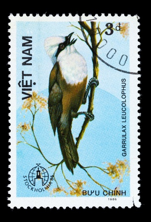 white crested laughingthrush: VIETNAM - CIRCA 1986: A stamp printed in Vietnam shows Garrulax leucolophus or white-crested laughingthrush, series devoted to the birds, circa 1986
