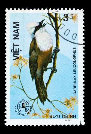 white crested laughingthrush: VIETNAM - CIRCA 1986: A stamp printed in Vietnam shows Garrulax leucolophus or white-crested laughingthrush, series devoted to the birds, circa 1986