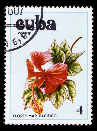 philatelic: CUBA - CIRCA 1978: A stamp printed in the Cuba shows flower, circa 1978 Stock Photo