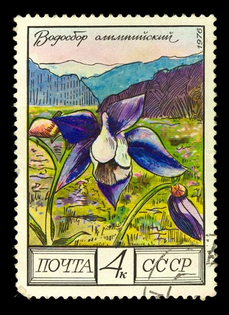 phytology: USSR - CIRCA 1976: A Stamp shows image of a Pasqueflower with the designation Olympic columbine, series, circa 1976