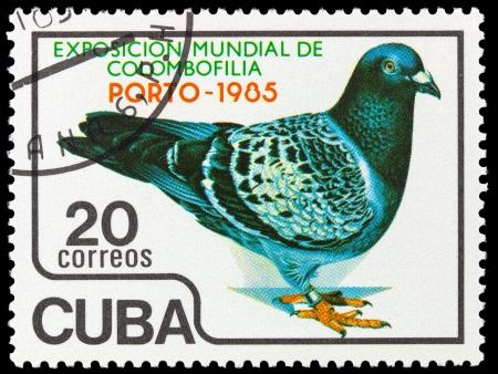 CUBA - CIRCA 1985: A stamp printed in Cuba, shows pigeon bird, series, circa 1985 Stock Photo - 14049236