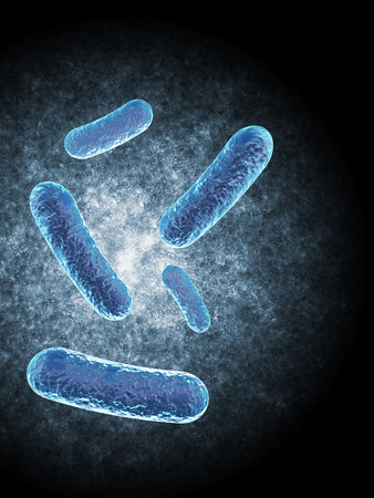 bacillus: Bacillus Bacteria