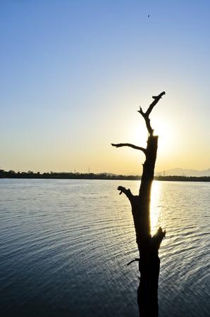 tree dead: Albero guasto sul lago Archivio Fotografico