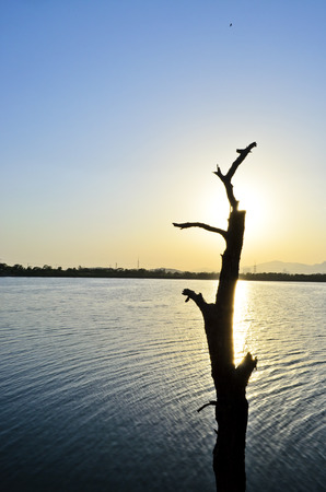 arbre mort: Dead Tree sur le lac