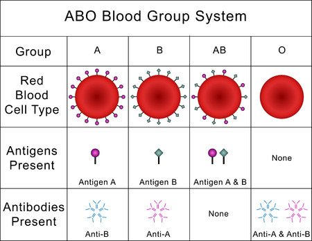 ABO Blood Group System Stock Photo