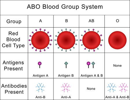 antibodies: ABO Blood Group System Stock Photo