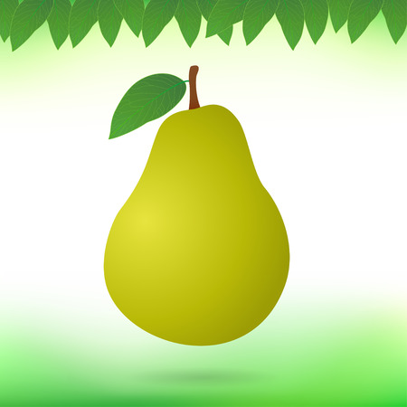pear: Pear Stock Photo