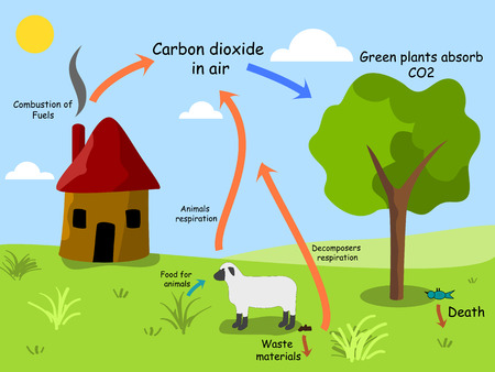 dioxide: Carbon dioxide cycle Stock Photo