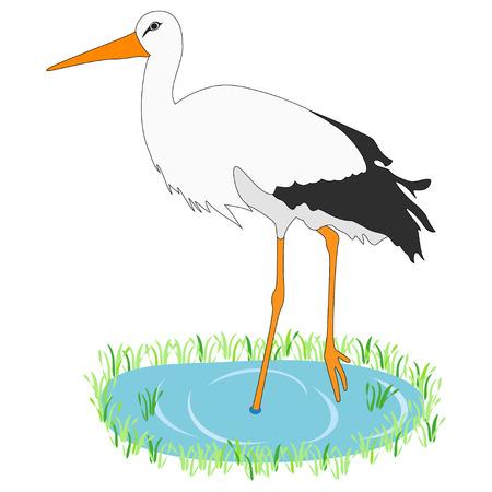 puddles: White Stork Stock Photo