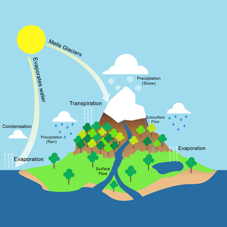 transpiration: Water cycle illustration Stock Photo