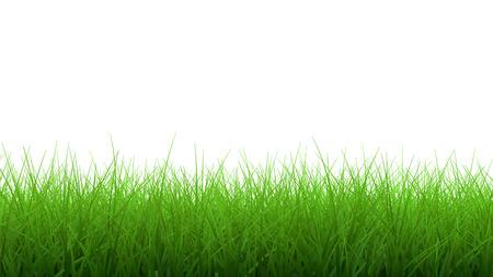 grass border: 3d Green grass border