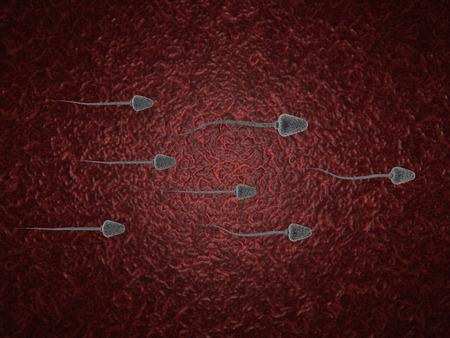 procreation: 3d sperm cells